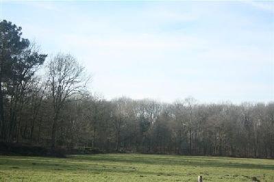 Brabantrit_2009 025.JPG