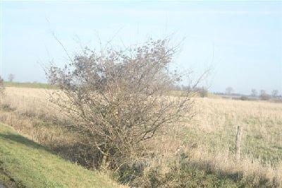 Brabantrit_2009 027.JPG